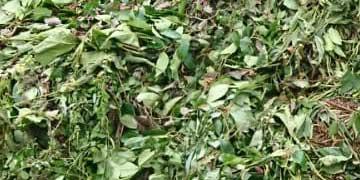 Groenafval